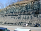 Mississippian Borden Formation, downslope just offshore clastic shelf in roadcut on Rt 801 Kentucky or the AA Highway