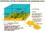 Grapestone Crust (Kendall after Geblein