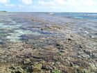 View of the Outer Living Coral Zone of the reef flat during the rising tide. Note coral diversity.