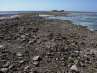 Overview of the Rubble Zone at the reef crest. Rubble consists of coral debris redistributed by storms. Wreck in the background is a decomissioned WWII vessel.