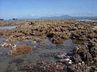 Leeward reef crest along the Anchorage at low spring tide. Note prominence of soft corals in the foreground.