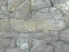 West Hook Head Co Wexford Lower Carboniferous Dolimitic Grainstones