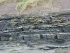 South Lumsdin's Bay Hook Head wave ripples and small channel/or wave scours Carboniferous Porter's Gate Formation