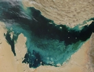 Persian Gulf Bloom